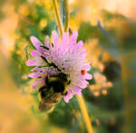 Flower and A bumblebee