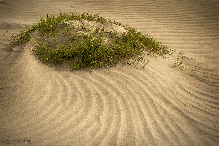 Grassy Knoll by DanSandy