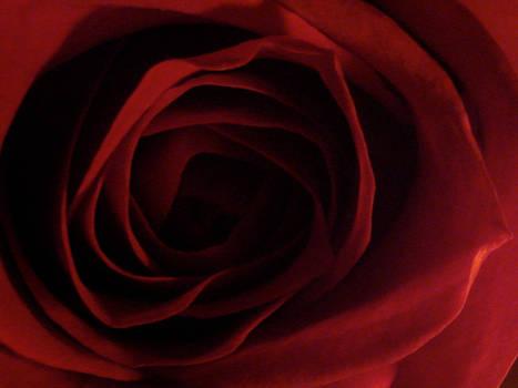 Roses Remind Me of Vaginas by ChelseaSavage