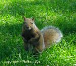Peanut, please? #2 by Photo--eye