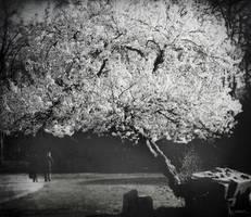 Addio, Inverno by sivel12001