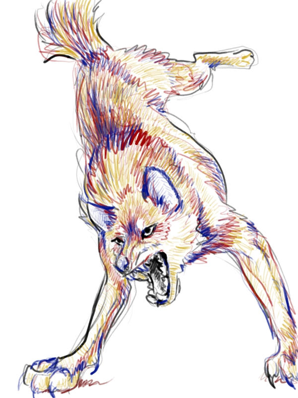 Quick digital wolf sketch by KitsuneBara