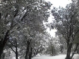 Snow 2 by SarinBetch