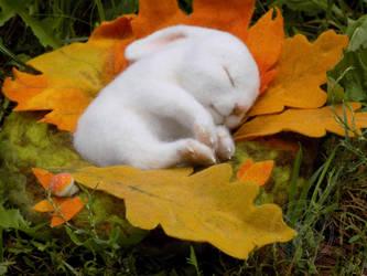 Sweet dream of a little bunny. by ImeriBridzhet