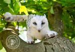 Owl - griffin by ImeriBridzhet