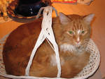 Kitteh in a Basket