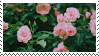 Rose Bush stamp