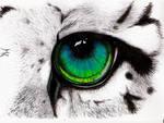 Snowleopard Eye