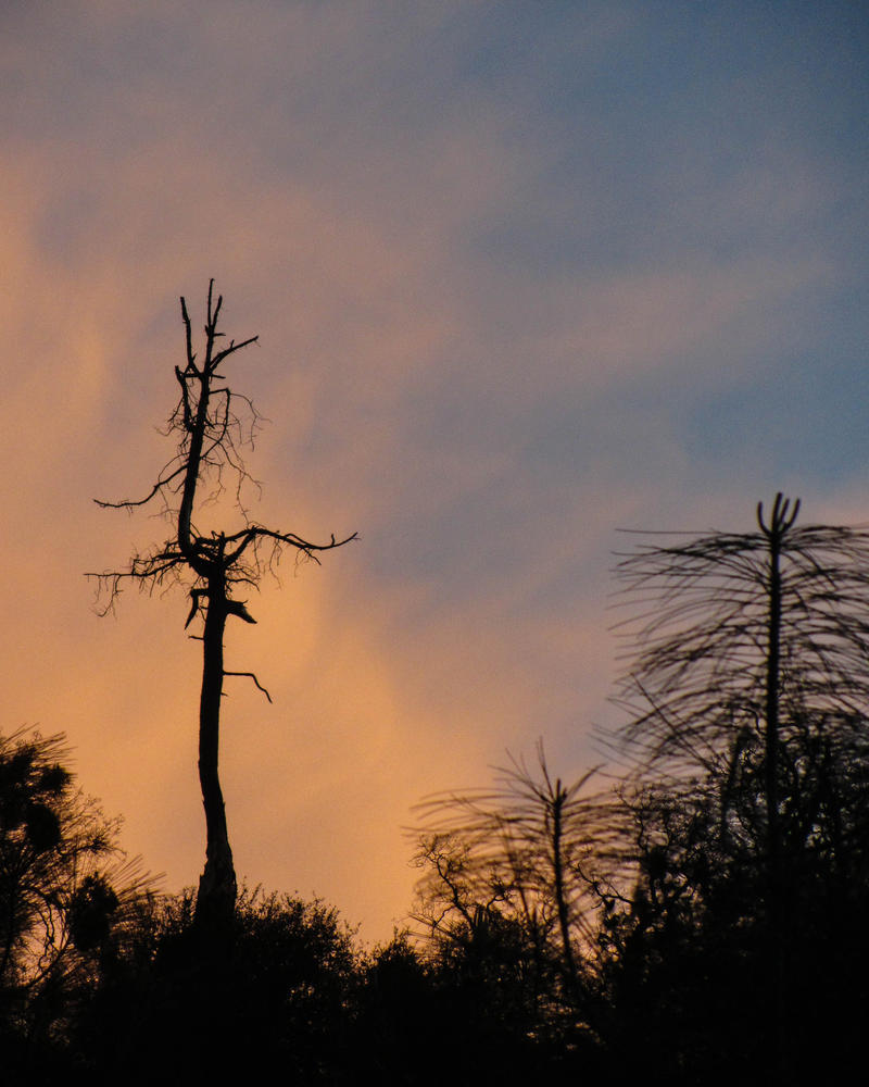 Snag and Sunset on Rattlesnake Bar Road by AFL