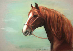 Smiling horse by JoBonito