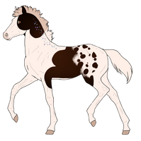 N6460 Padro Foal Design by KaitlyNicole