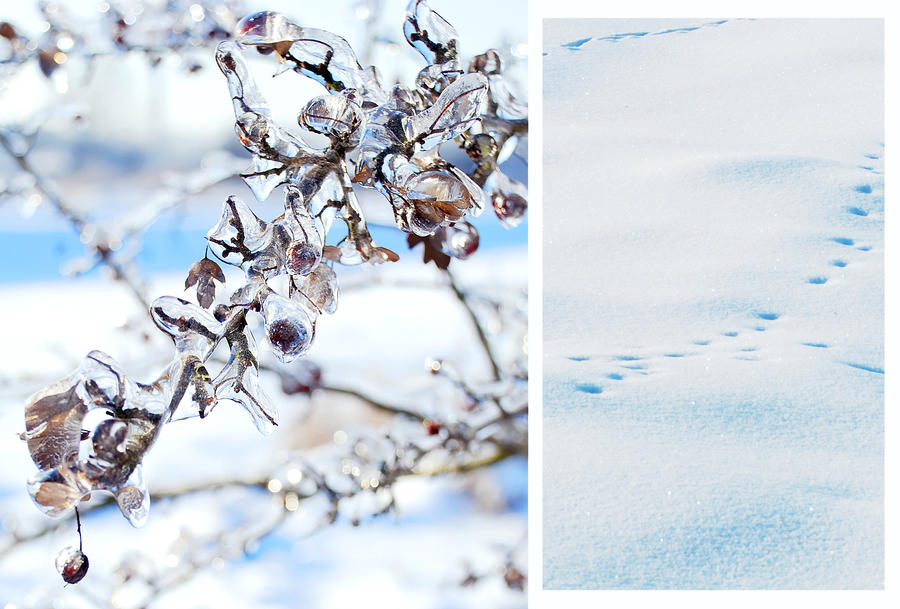 touch of winter by Nigrita