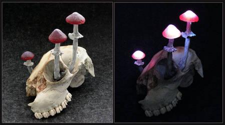 Mushroom Light Verfall