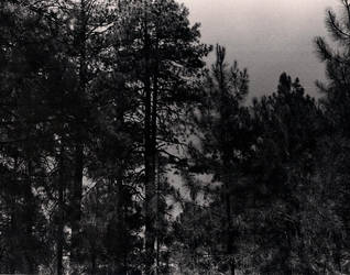 Black Forest by idontgivadam