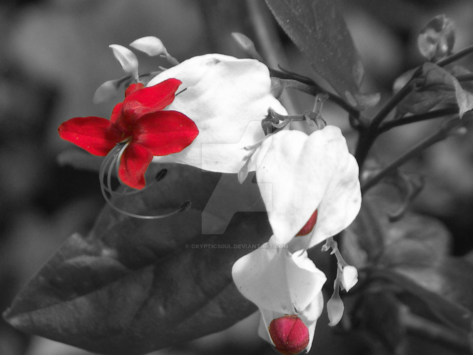 flowers selective coloring color - photo #14