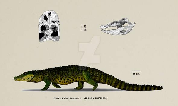 Gnatusuchus pebasesnsis
