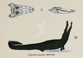 Leidyosuchus canadensis