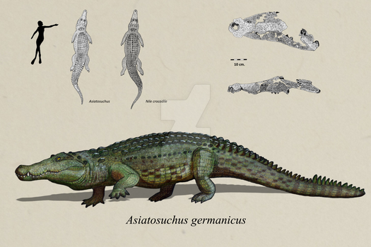Asiatosuchus from Issel