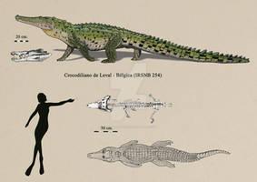 Leval crocodilian (Asiatosuchus depressifrons?)