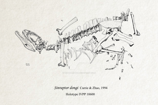Sinraptor dongi fossil