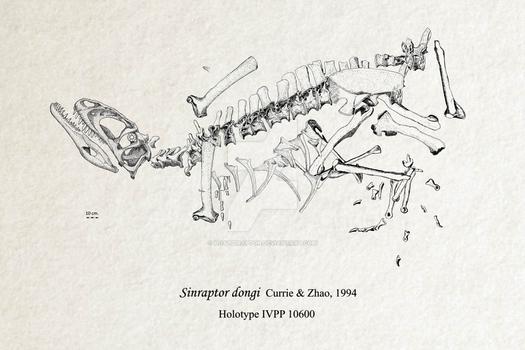 Sinraptor dongi fossil