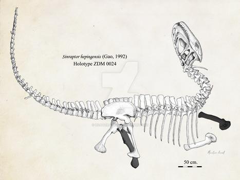Sinraptor hepingensis fossil