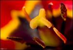 Tulip Furnace