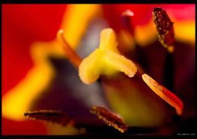 Tulip Furnace by KeldBach