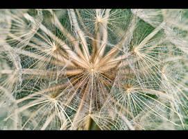 Web of Seeds by KeldBach