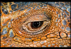 Iguana Eye by KeldBach