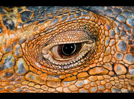 Iguana Eye by KeldBach