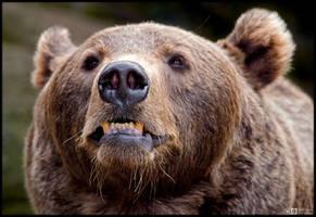 Angry Bear by KeldBach