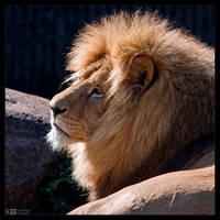 His Majesty by KeldBach
