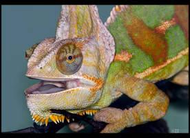 Veiled Chameleon by KeldBach