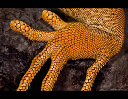 Scaled Fingers by KeldBach