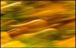 Autumnal Abstraction by KeldBach