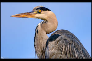 Heron Profile by KeldBach
