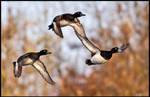 Trio Flight