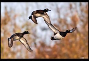 Trio Flight by KeldBach