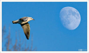 Fly Me to the Moon... by KeldBach