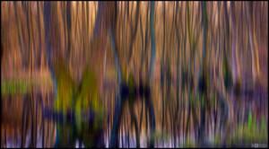 Dreamy Distortion
