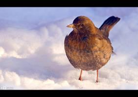 Snow Bird by KeldBach