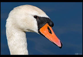 Swan Profile by KeldBach