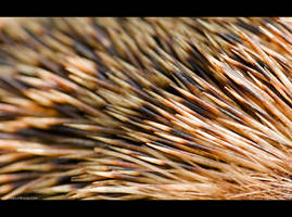 Hedgehog Abstraction by KeldBach