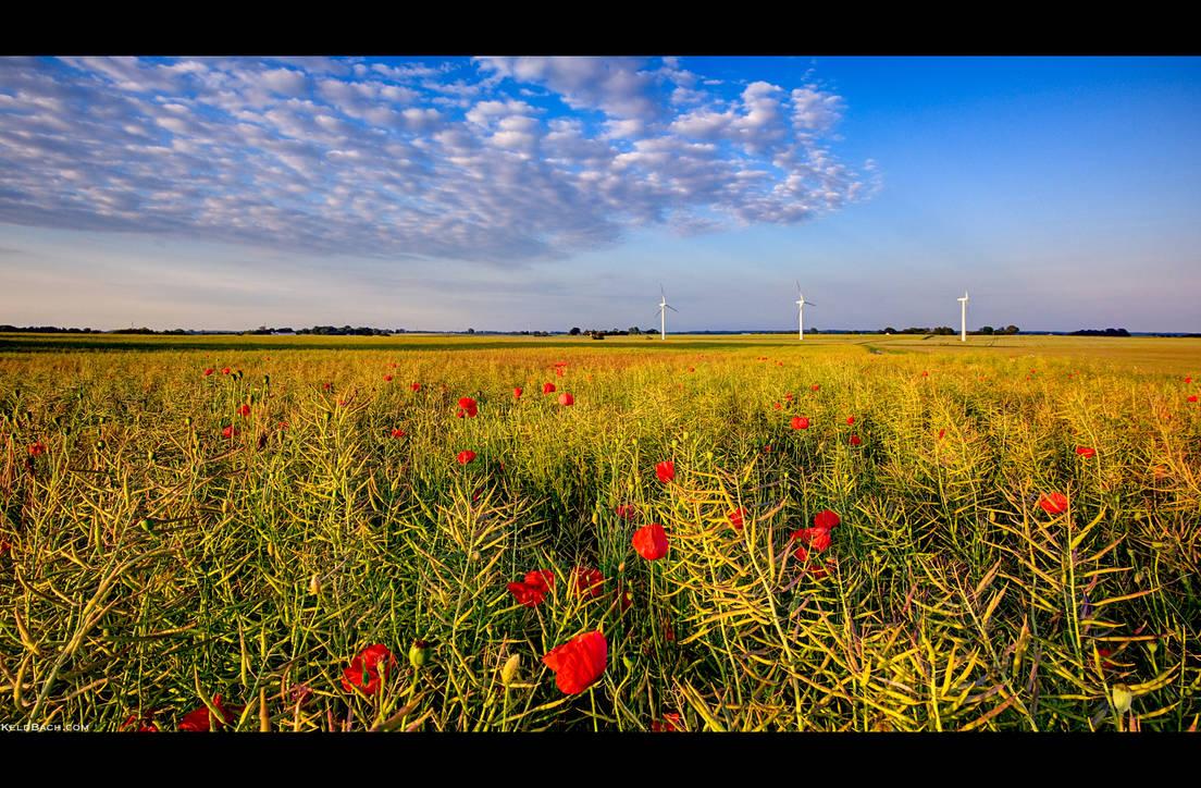 Poppy Field by KeldBach