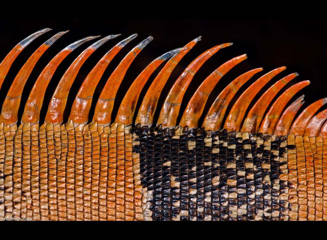 Spiky by KeldBach