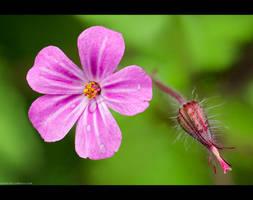 Tiny Pinky by KeldBach