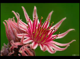 Crazy Flower by KeldBach