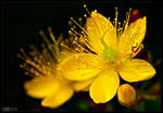 Hypericum Revisited