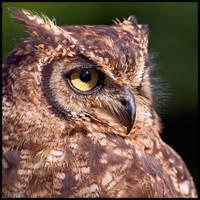 Eagle Owl Profile by KeldBach